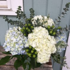Blue and white hydrangea with berries