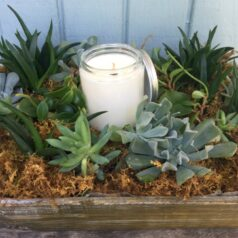 succlent garden with candle
