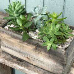 Succulent box 3420